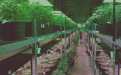 IRC 280E & Defunded War on Medical Marijuana Analysis