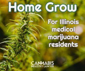 Buying cannabis seeds legally illinois