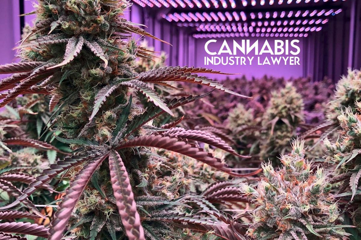 illinois cannabis license timeline
