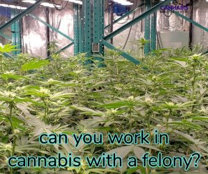 can you work at or own a dispensary or grow with a felony?