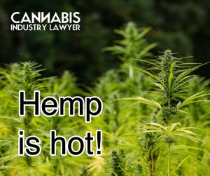 Hemp tests hot