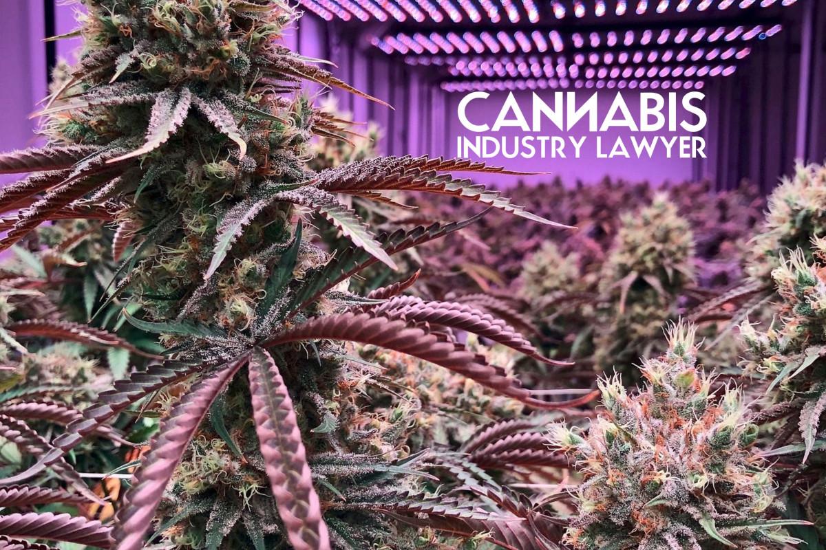 Departamento de control de calidad de cannabis de Ag