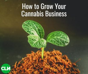 Growing Cannabis Business Cannabis Search Group