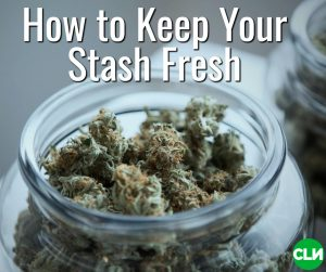 How to keep weed fresh Boveda