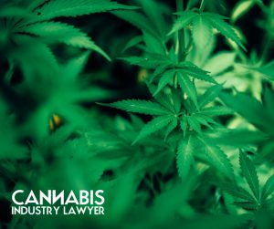 Cannabis Application Review (1)
