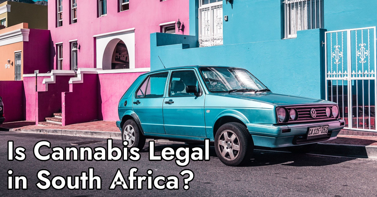 Is Cannabis Legal in South Africa Dagga Party