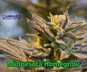 Minnesota Personal Use Homegrow Cannabis
