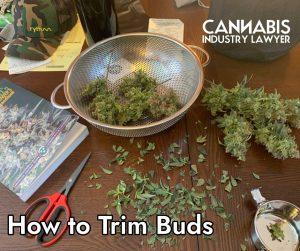 wet trim or dry trim marijuana