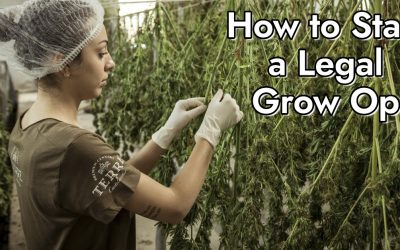 How to Start a Legal Grow Op
