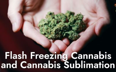 I-Flash Freezing Cannabis ne-Cannabis Sublimation