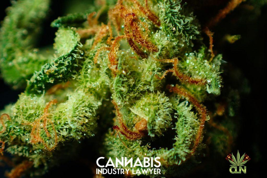Illinois Cannabis dispansè aplikasyon 2020