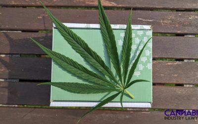 אתה יכול לגדל מריחואנה במישיגן