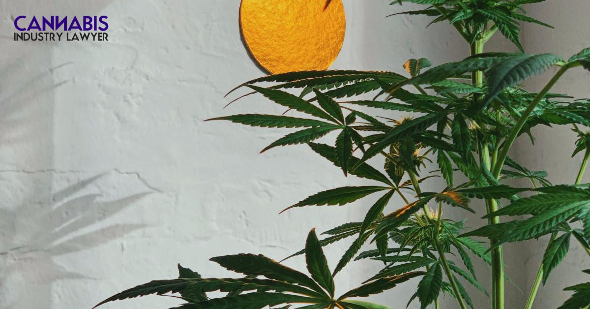 can you grow marijuana in Arizona