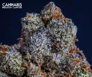 Georgia Medical Cannabis Production License