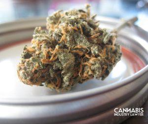 Comment ouvrir un dispensaire de cannabis dans le New Jersey