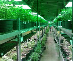 How to get a dispensary license in New Jersey