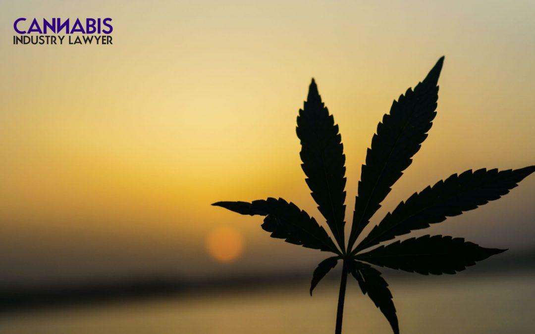 Michigan Marijuana License: How to get prequalified