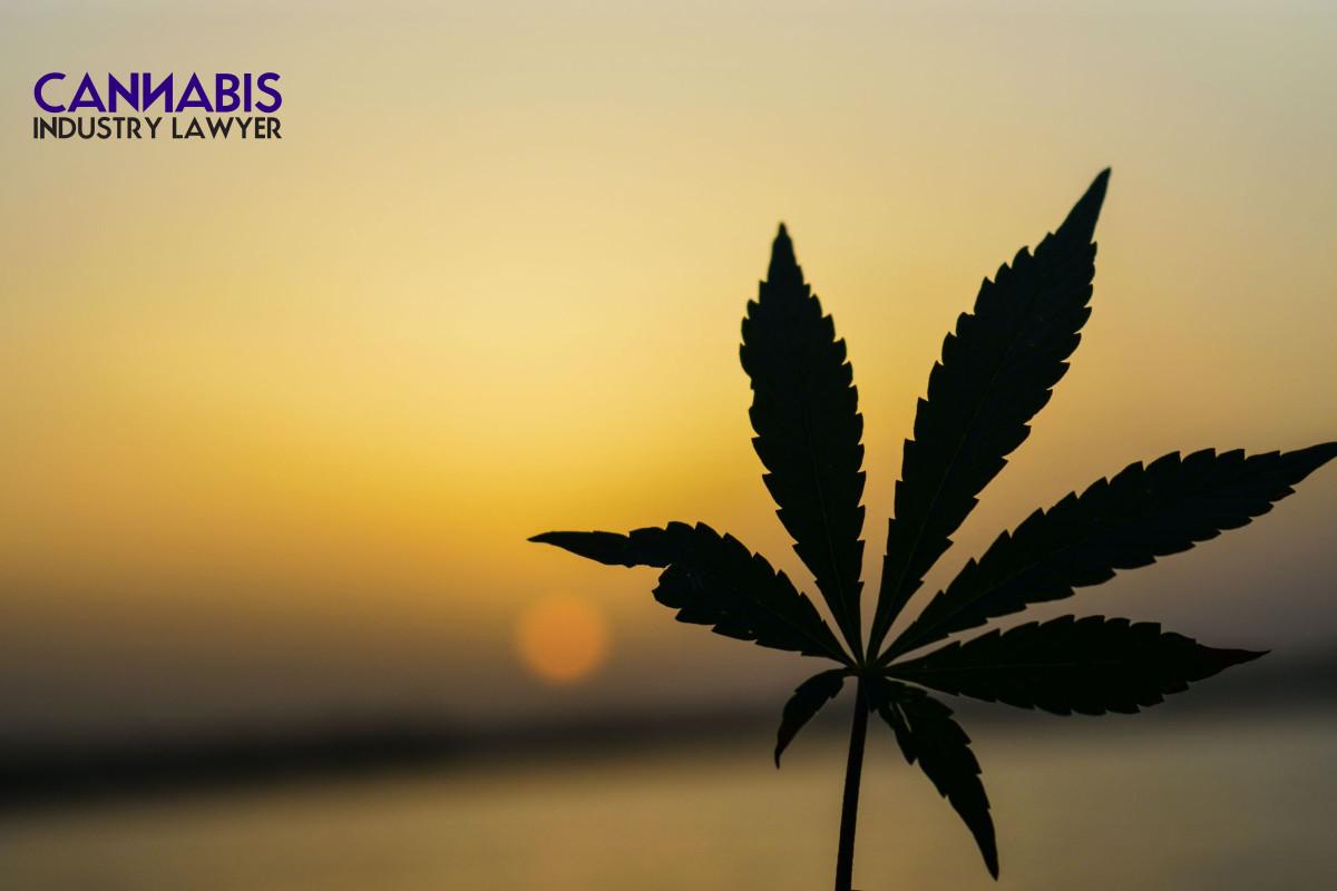 Michigan Marijuana License - How to get prequalified