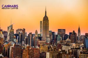 new york cannabis distributor license